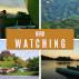 Bird Watching - Panama & Nicaragua